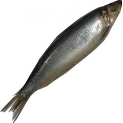 Marinuota sveriama silkė £4.39 kg vnt~ 350g (Marinated herring)