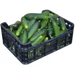 Šviežus agurkai trumpavaisiai (Fresh cucumbers) £3,99 kg