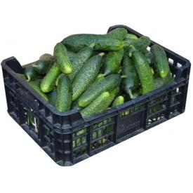 Šviežus agurkai trumpavaisiai (Fresh cucumbers) £2,19 kg
