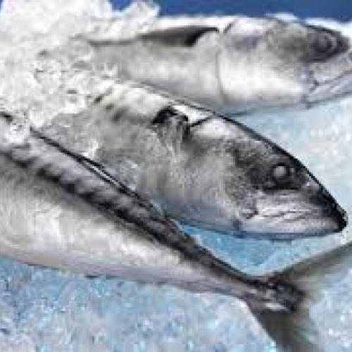 Žuvis (Fish)